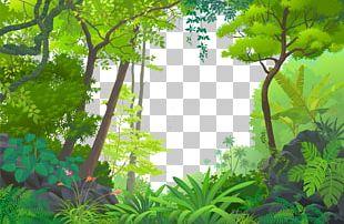 Jungle Euclidean Tropical Rainforest PNG