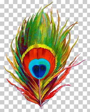 Krishna Bird Feather Peafowl PNG