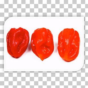Stuffed Peppers Chili Pepper Bell Pepper Paprika Espelette Pepper PNG