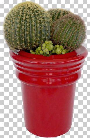 Cactaceae Succulent Plant Flower PNG
