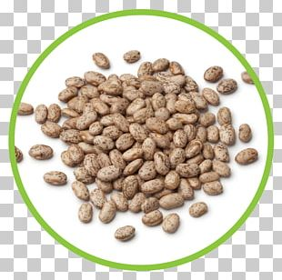 Pinto Bean Jamaican Blue Mountain Coffee Food Stock Photography PNG