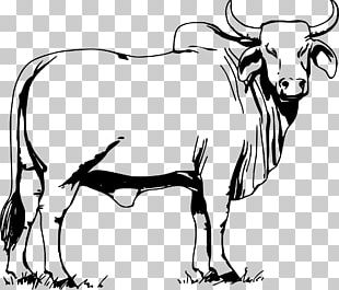 Cattle Ox Bull Drawing PNG