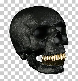 Skull Gold Teeth Human Tooth Jaw PNG