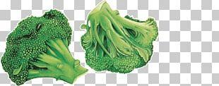 Leaf Vegetable Broccoli Chou Blog Association Kokopelli PNG
