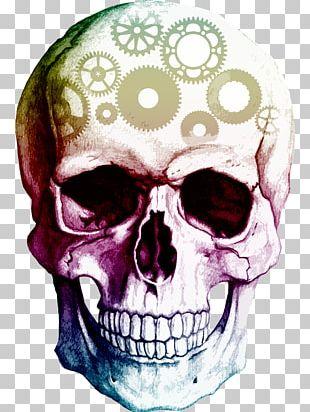 Skull Human Skeleton PNG