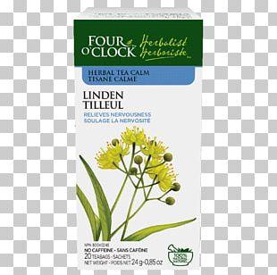 Herbal Tea Herbalism German Chamomile PNG