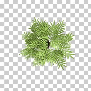 Tree Stock Photography Plant PNG