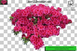 Flower Plant Shrub PNG