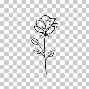 Drawing Rose Flower PNG