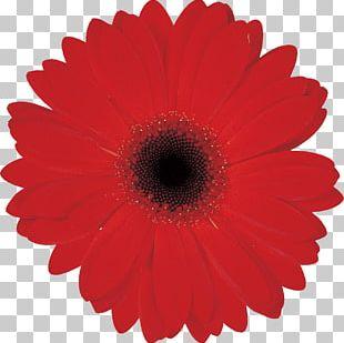 Logo Color Flower PNG