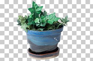 Plastic Flowerpot Leaf Houseplant Herb PNG