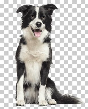 Border Collie Rough Collie Old English Sheepdog Puppy Bearded Collie PNG