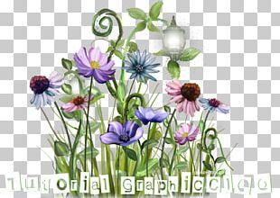Flower Floral Design Photography Plant Stem Internet Forum PNG