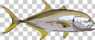 Thunnus Crevalle Jack Giant Trevally Fishing Blue Runner PNG