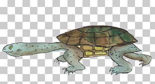 Box Turtle Reptile Tortoise Sea Turtle PNG