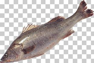 Salmon Fish Products Sardine Trout Cod PNG