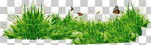 Grasses PNG