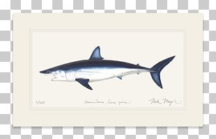 Great White Shark Isurus Oxyrinchus International Game Fish Association Fin PNG