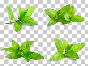 Mint Euclidean Stock Photography PNG