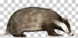Badger PNG
