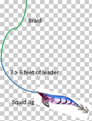 European Squid Alloteuthis Subulata Fishing Baits & Lures PNG