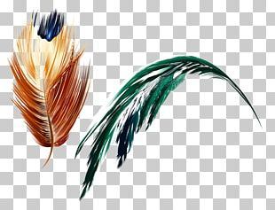 Feather Art Light PNG