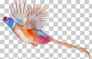 Bird Flamingos Watercolor Painting PNG