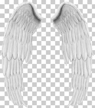 Angel Wing Bird PNG