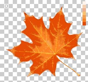 Autumn Leaf Color Stock Photography PNG