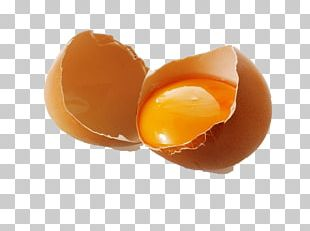 Egg Icon PNG