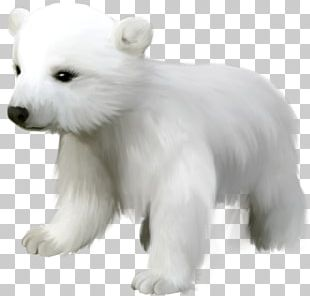 Polar Bear Kodiak Bear Giant Panda Pizzly PNG