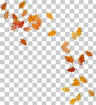 Autumn Leaves Leaf PNG