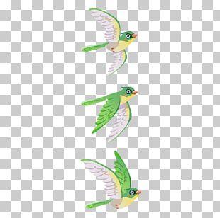 Bird Parrot Green PNG