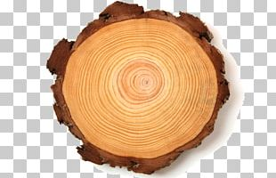 Pulp Chief Executive Paper Wood Tree PNG