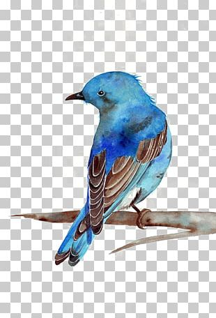 Watercolor Painting Bluebird Printmaking PNG