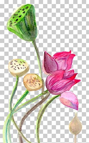 Watercolor Painting YogaSole Watercolor: Flowers PNG