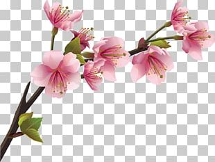 Cherry Blossom Branch Wall Decal PNG