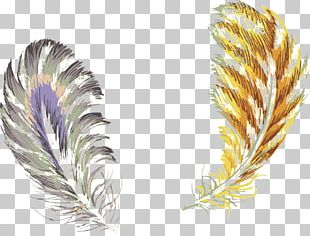 Bird Feather Color PNG