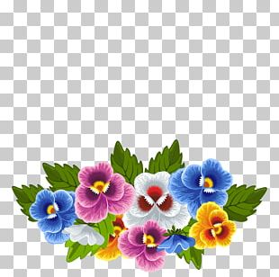 Frames Pansy PNG