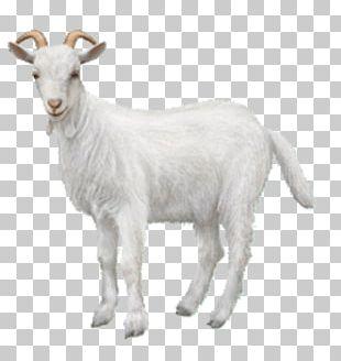 Goat Chiva Bus Ahuntz Animal Sheep PNG