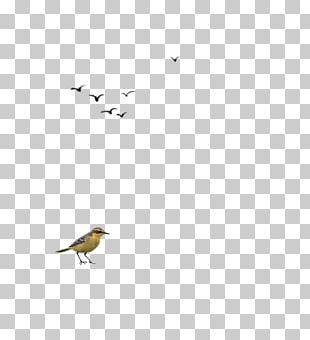 Beak Angle LINE Pattern PNG