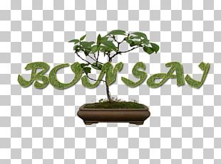 Sageretia Theezans Flowerpot Bonsai Tree The Karate Kid PNG