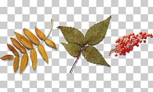 Leaf Autumn Icon PNG