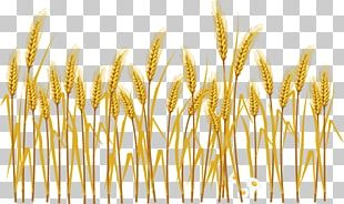 Common Wheat Cereal Ear Illustration PNG