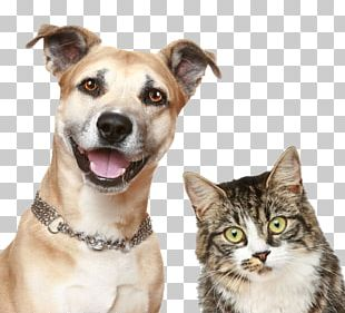 Dog Cat Puppy Pet Sitting PNG