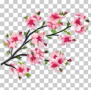 Cherry Blossom Branch Tree PNG