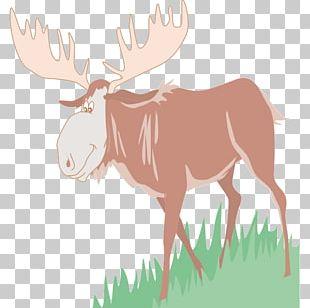 Moose Reindeer PNG