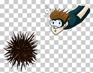 On The Training Of Shooters Knowledge Sea Urchin Drawing PNG