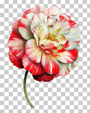 Flower Paper Painting Floral Design Drawing PNG