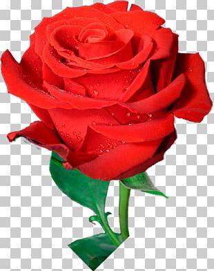 Garden Roses Flower Bouquet Cabbage Rose Cut Flowers PNG